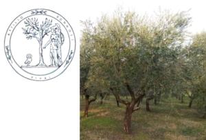 Xylella, l'olivo resistente che arriva da Pistoia - Plantgest news sulle varietà di piante