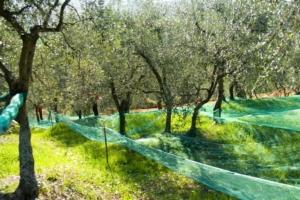 EVENTO ONLINE - Micropropagazione dell'olivo: problemi e prospettive - Plantgest news sulle varietà di piante