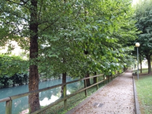 ontani-riva-fiume-lemene-portogruaro-ve-secondo-art-ott-2021-rosato-fonte-mario-rosato