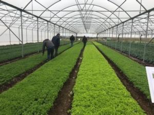 Enza Zaden e l'Open day baby leaf 2020 - Plantgest news sulle varietà di piante