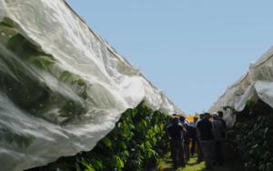 EVENTO ONLINE - Sweet, la star di Salvi Vivai - Plantgest news sulle varietà di piante