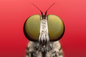 Organismi alieni, i muri non bastano - Plantgest news sulle varietà di piante