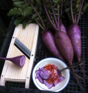 ortaggi-murasaki-daikon-radici-giapponesi-la-fattoria-del-bricco-rubrica-agroinnovatori-giu-2021-fonte-la-fattoria-del-bricco