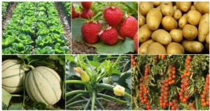 Difesa e nutrizione delle colture orticole – prima parte