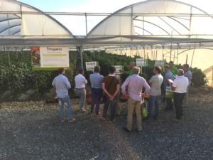 orticoltura-e-valore-prove-in-campo-peperone-2015-2092