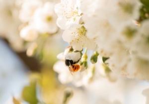 Pollinature, l'impollinazione on-demand - Plantgest news sulle varietà di piante