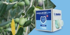 La protezione dell'olivo contro rogna e freddo
