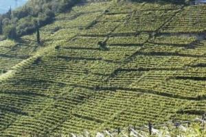 paesaggio-agricoltura-fonte-unibz