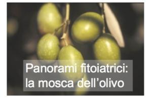 Panorami fitoiatrici: la mosca dell'olivo
