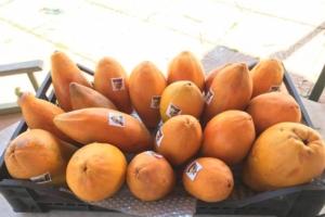 Cosa serve per coltivare la papaya? - Plantgest news sulle varietà di piante
