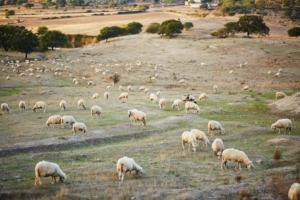 pascoli-pascolo-ovini-pecore-by-ekaterina-pokrovsky-fotolia-750