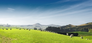 pascolo-pastorizia-pecore-paesaggio-by-zhu-difeng-fotolia-750