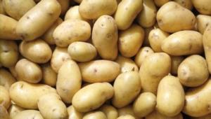 patata-crpv