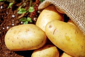 Evolution: specialista del pre-raccolta della patata
