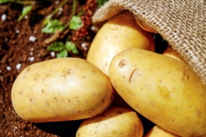 patata-tubero-bycouler-pixbay-750x500-15850601920