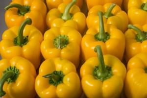 Peperoni Enza Zaden, soluzioni per sviluppare il mercato - Plantgest news sulle varietà di piante