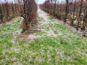 pereto-castelfranco-modena-danni-maltempo-fonte-confagricoltura-20201209-667x500