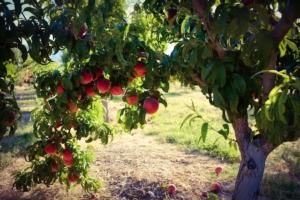 Frutteti ecoresponsabili, un modello agricolo vincente - Plantgest news sulle varietà di piante