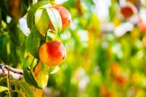 Vivai Quadrifoglio, qualità chiavi in mano - Plantgest news sulle varietà di piante