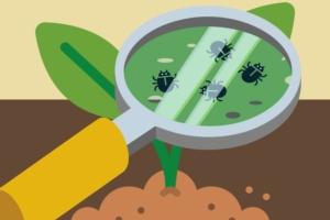 Vivaismo frutticolo, maturazione in corso - Plantgest news sulle varietà di piante
