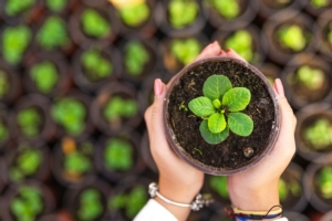 Ruop, i piccoli produttori non devono più registrarsi - Plantgest news sulle varietà di piante