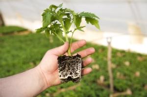 Più radici e terreni più ricchi - Fertilgest News