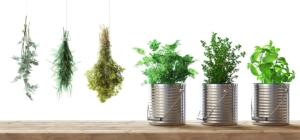 piante-aromatiche-erbe-aromatiche-by-aldecastudio-fotolia-750
