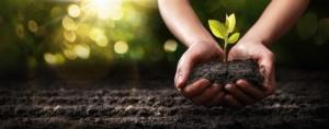 piante-protezione-piantina-mani-terreno-by-pasko-maksim-adobe-stock-750x295