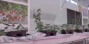 piante-serra-schermata-video-barbara-righini-intervista-idromeccanica-lucchini-macfrut-2017