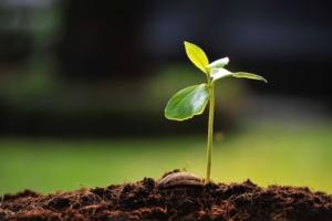 Biostimolanti, la parola alle aziende - Arysta Lifescience - Fertilgest News