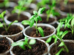 Lo iodio che serve alle piante - colture - Fertilgest