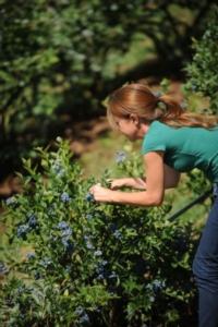 Piccoli frutti: mercoledì la 6° Giornata tecnica Mach - Plantgest news sulle varietà di piante
