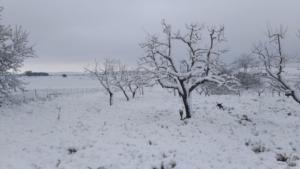 piglia-nevicata-fuori-stagione-3apr20-fonte-coldiretti-puglia