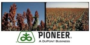pioneer-africa-sviluppo-sorgo