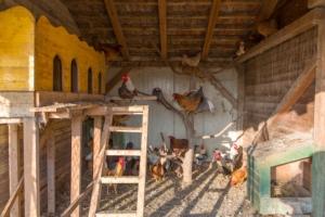 pollaio-polli-galline-ovaiole-avicoli-fonte-davor-adobe-stock-750x500jpeg