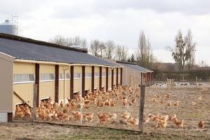 polli-allevamento-by-laurine45-fotolia-750