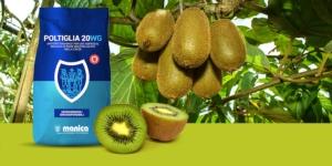 Infezioni Psa actinidia: programma e previeni con Poltiglia 20 WG Green