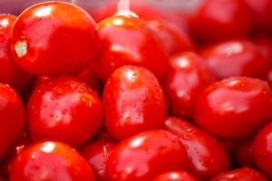 Massimizzare resa e produzione del pomodoro da industria - colture - Fertilgest