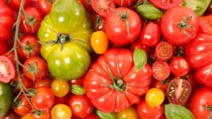 pomodori-pomodoro-by-m-studio-adobe-stock-750x422