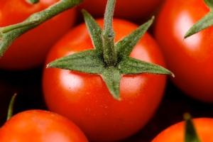 Pomodoro da mensa 2018, la linea proposta da Biogard
