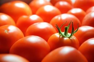 Arriva il pomodoro salva-clima, è come il ciliegino ma gli serve poca acqua - Plantgest news sulle varietà di piante