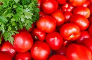 Pomodoro da industria, c'è l'accordo per la campagna 2018 - Plantgest news sulle varietà di piante