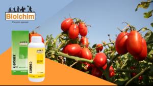 Pomodoro da industria tardivo: più colore, più brix, meno scarto - Biolchim - Fertilgest News