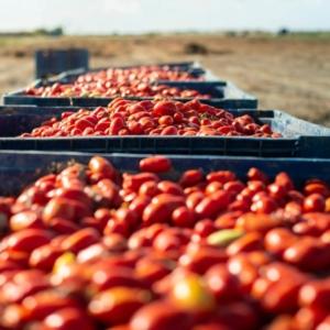 pomodoro-fonte-cifo