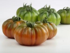 Enza Zaden, focus sul pomodoro da mensa - Plantgest news sulle varietà di piante