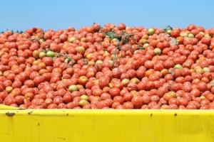 Road to Quality: la gestione del pomodoro in coltura protetta - Plantgest news sulle varietà di piante
