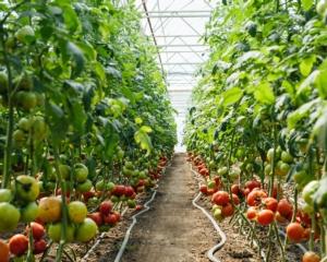 Stanchezza del terreno, come produrre in condizioni difficili - Fertilgest News