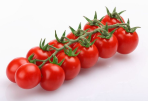 Vespucci F1: buono, attraente e produttivo - Plantgest news sulle varietà di piante