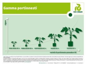 Pomodoro, i nuovi portinnesti Rijk Zwaan - Plantgest news sulle varietà di piante