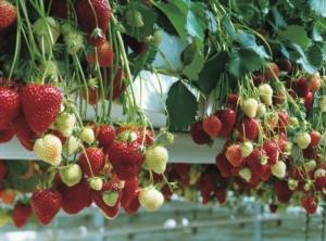 Ampia possibilità di scelta = migliori raccolti? - le news di Fertilgest sui fertilizzanti